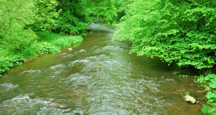 Vandløb med høj vandstand
