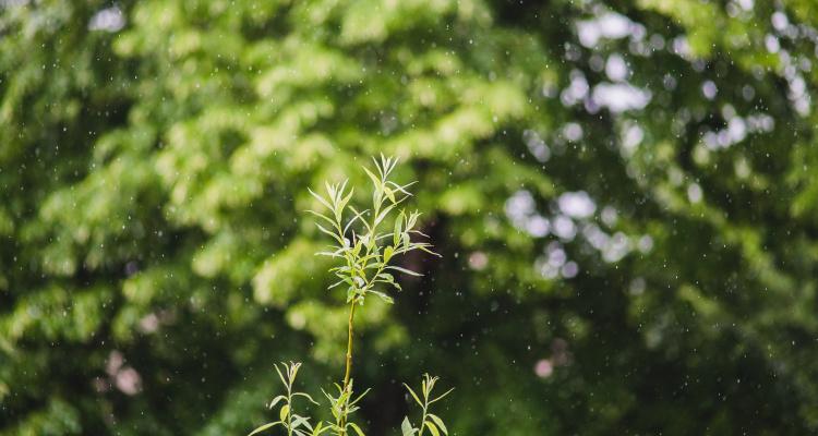Regn, bøg